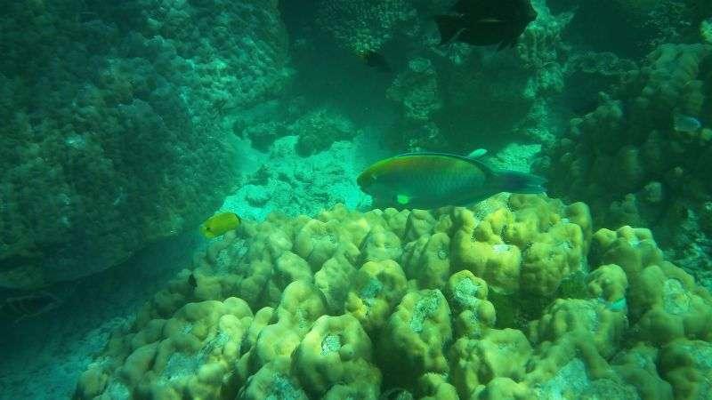 Surin Island 24